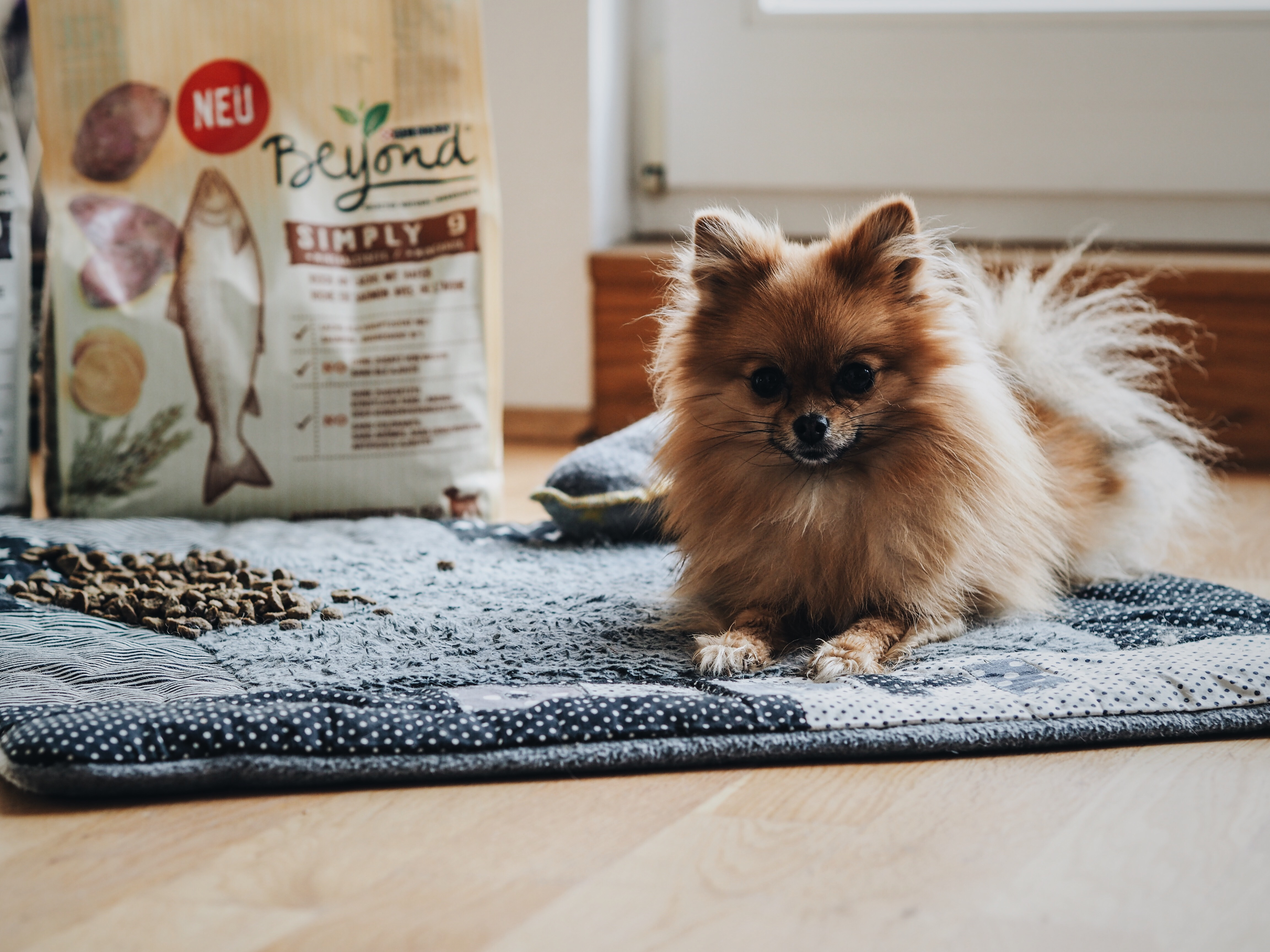 allthatchoices by laura fashionblog mainz frankfurt purina beyond hundefutter gesunde ernährung